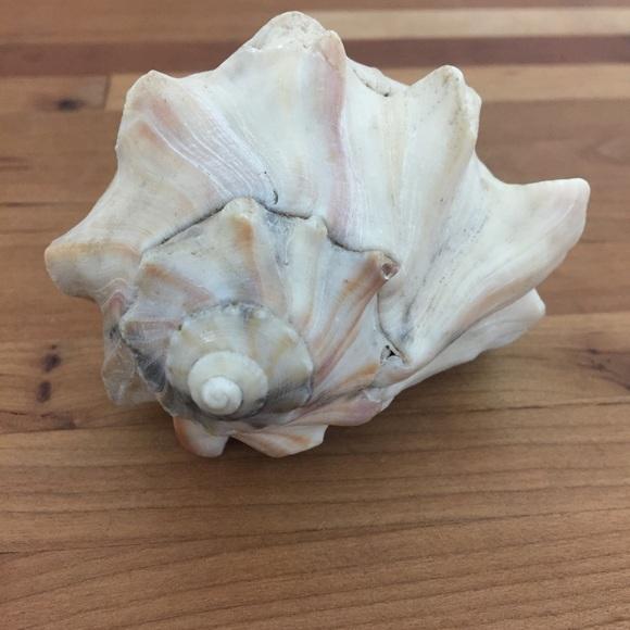 Beautiful Real Seashell